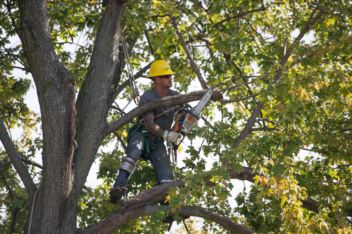 Dte Energy Tree Trimming